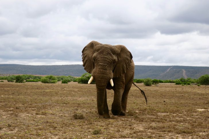 7 insider tips to enjoy an awesome South African adventure | Point Hacks