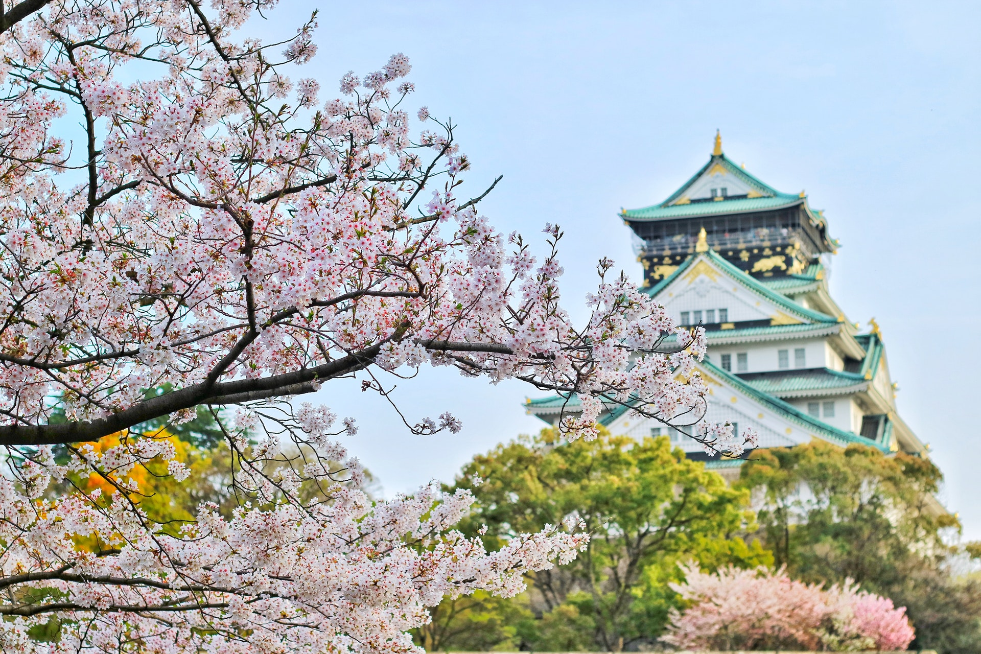 Osaka Cherry Blossom | Point Hacks